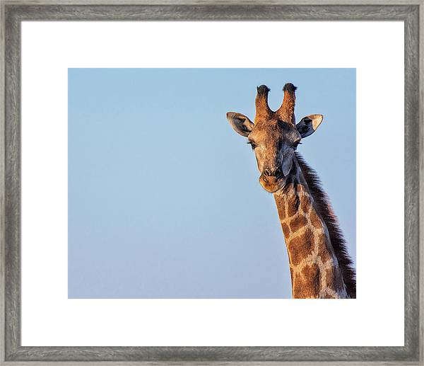 Curious 1 Framed Print