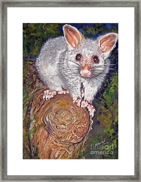 Curious Possum  Framed Print