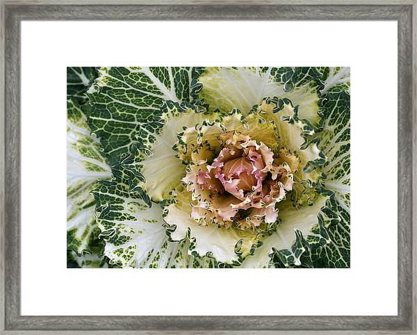 Curly To The Core Framed Print