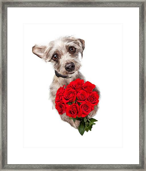 Cute Dog With Dozen Red Roses Framed Print