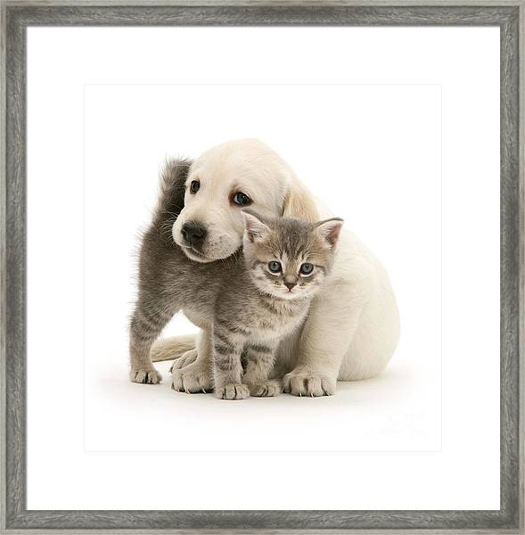 Cute Kitten And Perfect Puppy Framed Print