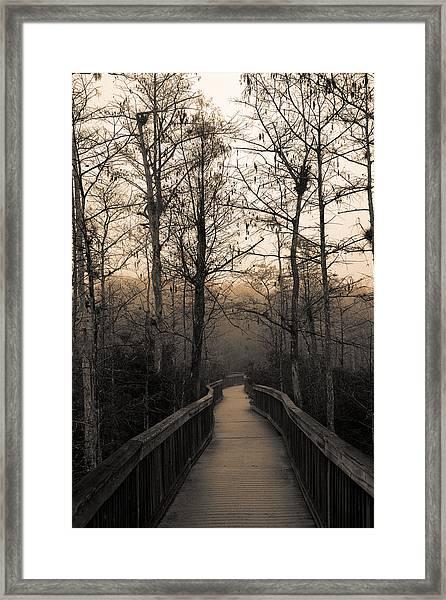 Cypress Boardwalk Framed Print