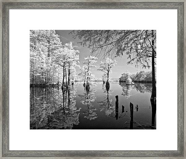 Cypress In Walkers Mill Pond Framed Print