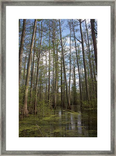 Framed Print featuring the photograph Cypress Pond by Dylan Punke