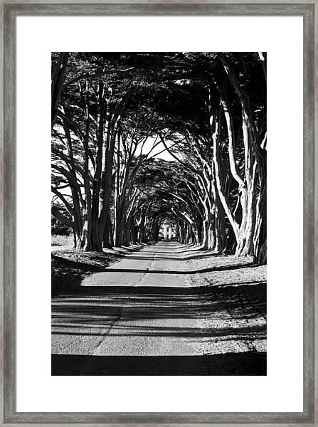 Cypress Tree Tunnel Framed Print