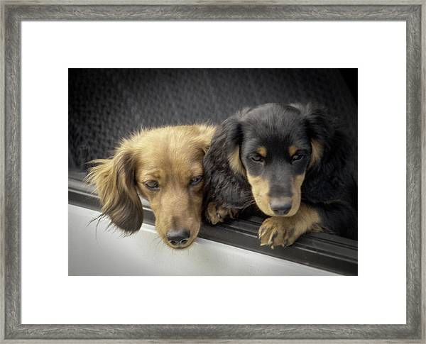 Framed Print featuring the photograph Dachshunds by Samuel M Purvis III