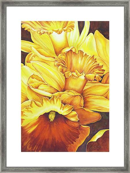 Daffodil Drama Framed Print