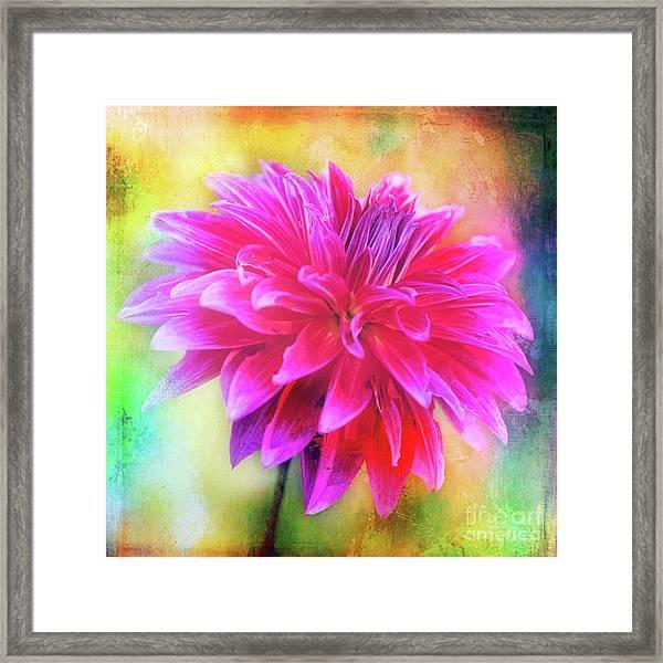 Dahlia Abstract Framed Print