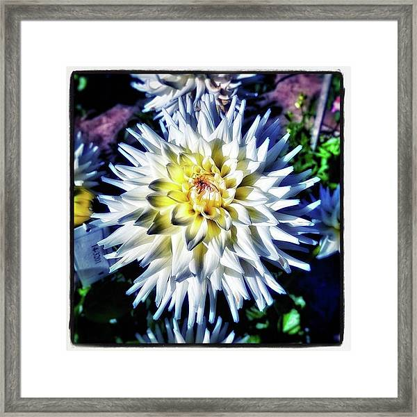 Dahling! You're Looking So Lovely Framed Print by Mr Photojimsf