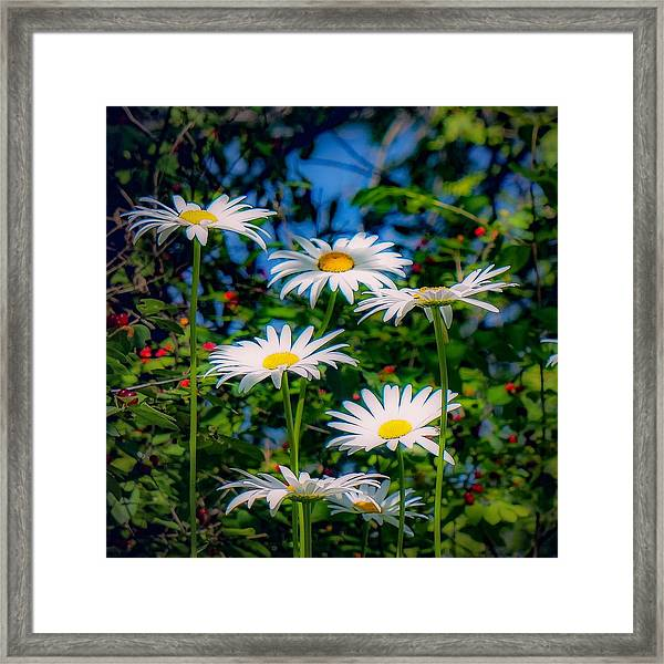 Daisies And Friends Framed Print
