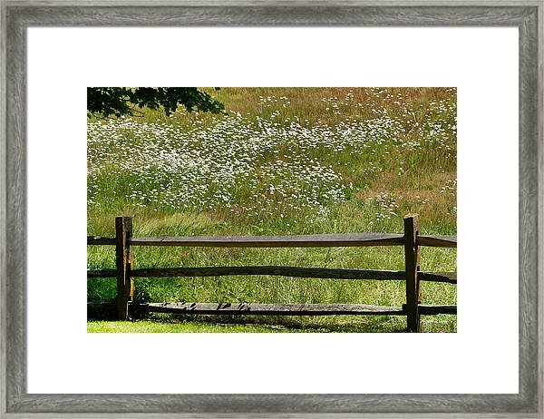 Daisies On The Vineyard Framed Print
