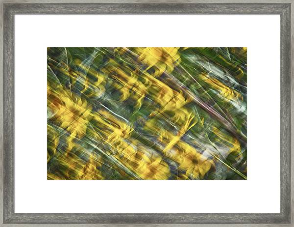 Daisy Abstract Framed Print
