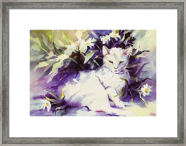 Daisy Cat Framed Print
