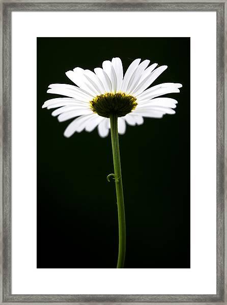 Daisy Down Under Framed Print