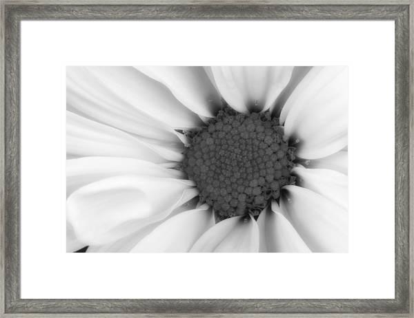 Daisy Flower Macro Framed Print