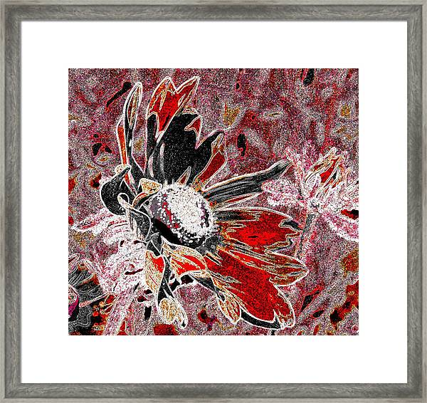 Daisy In Red Framed Print