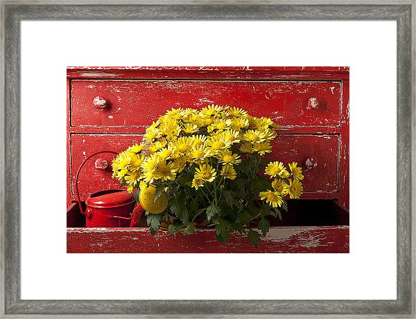 Daisy Plant In Drawers Framed Print