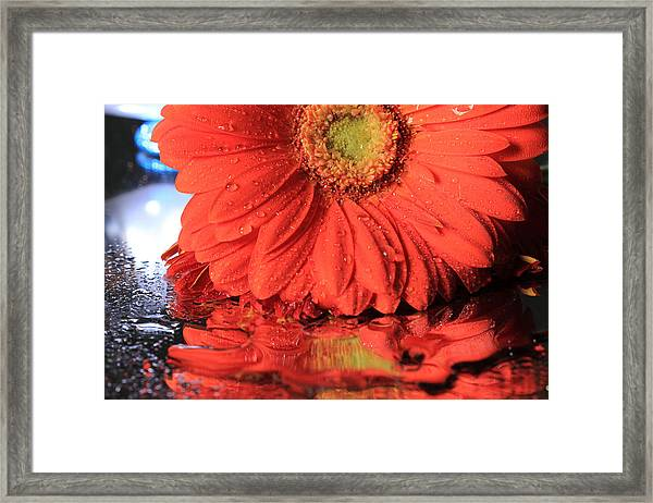 Daisy Reflections Framed Print