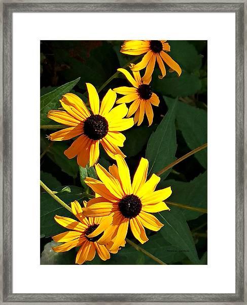 Daisy Row Framed Print