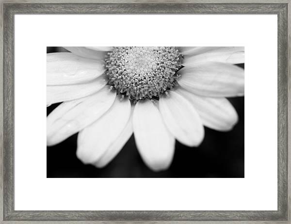 Daisy Smile - Black And White Framed Print