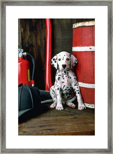 Dalmatian Puppy With Fireman's Helmet  Framed Print