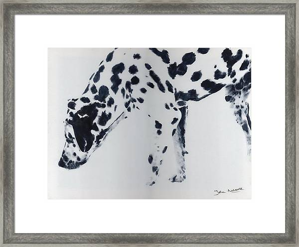 Dalmation Framed Print