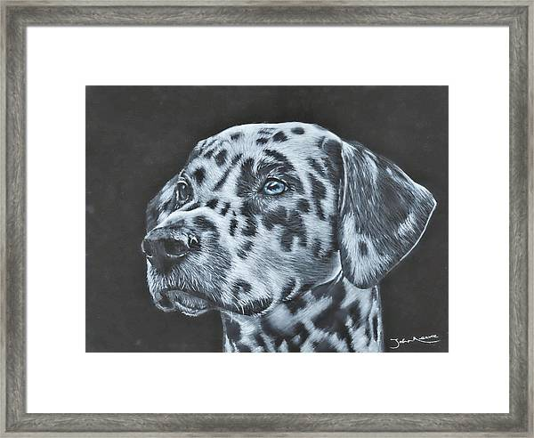 Dalmation Portrait Framed Print