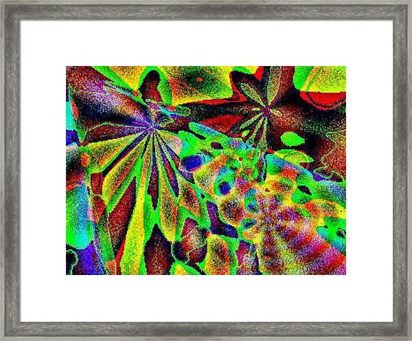 Damselwing Framed Print