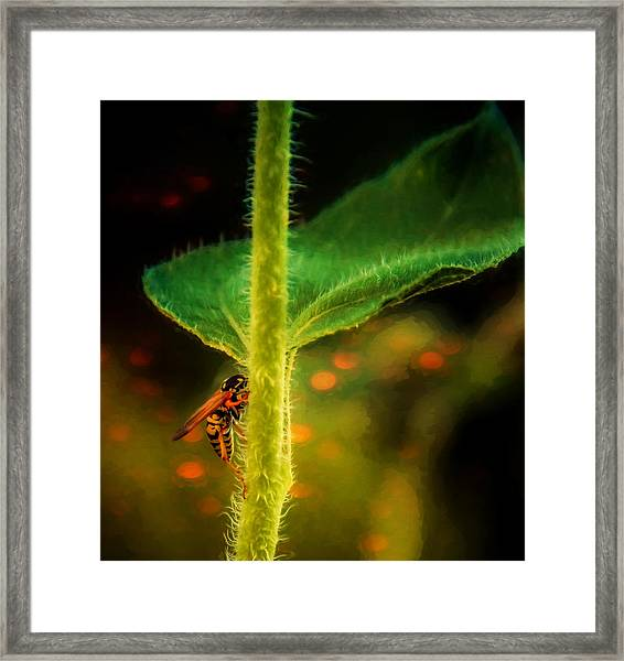 Dance Of The Wasp Framed Print