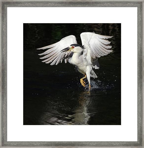 Dance On Water. Framed Print