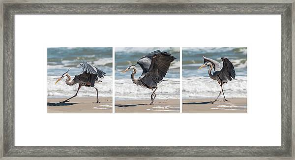 Framed Print featuring the photograph Dancing Heron Triptych by Patti Deters