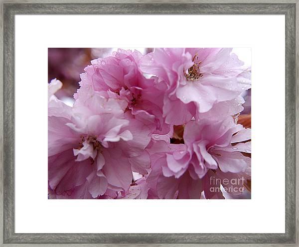 Dancing In A Springtime Shower Framed Print