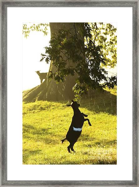 Dancing In The Rain Framed Print