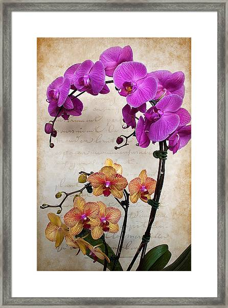 Dancing Orchids Framed Print