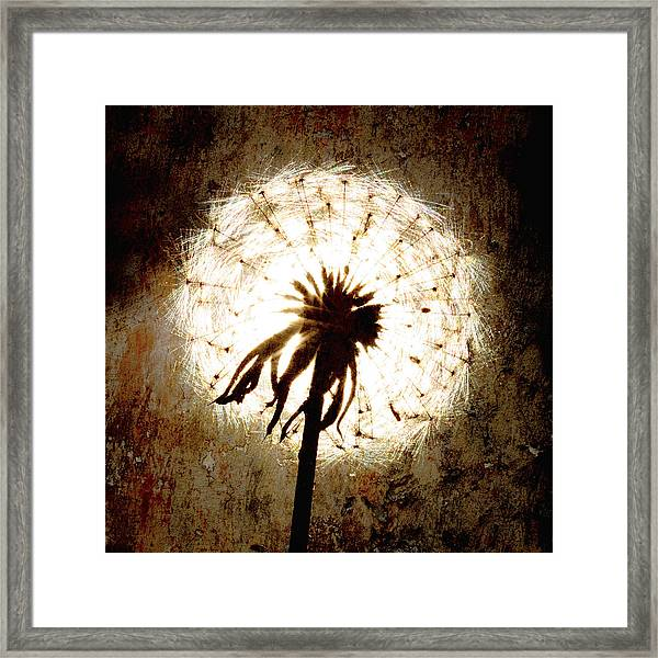 Dandelion Art 5 Framed Print by Falko Follert