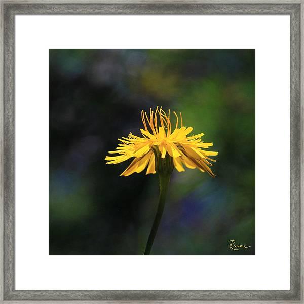 Dandelion Dance Framed Print