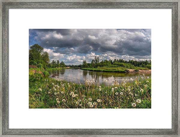 Dandelion Field On The River Bank Framed Print
