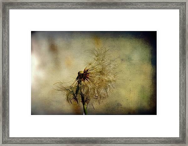 Dandelion Flower Framed Print by Valmir Ribeiro