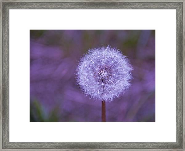 Dandelion Geometry Framed Print