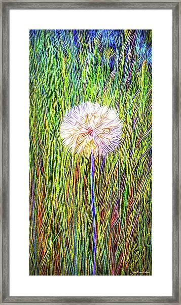 Dandelion In Glory Framed Print