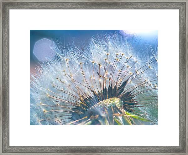 Dandelion In Light Framed Print