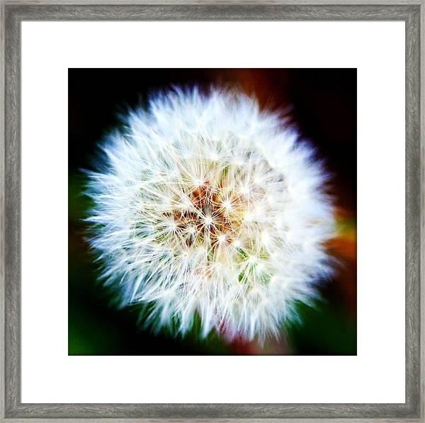 Dandelion Puff Framed Print