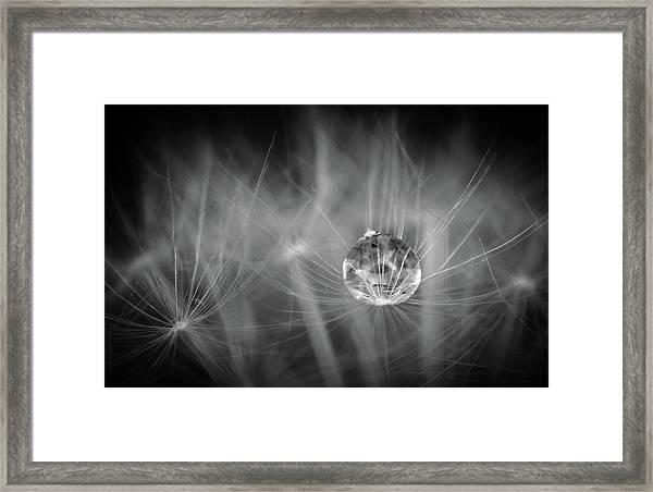 Dandelions Are Good For Something Framed Print