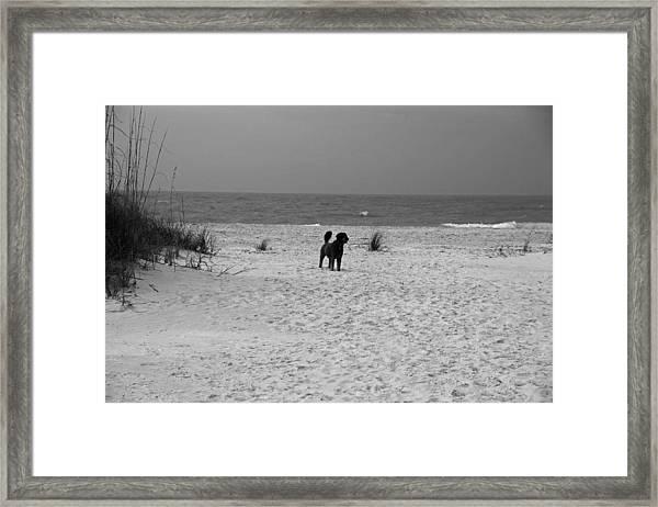 Dandy On The Beach Framed Print