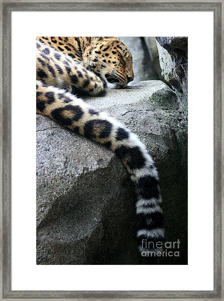 Dangling And Dozing Framed Print