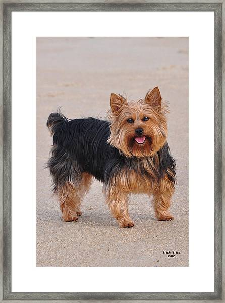 Dapper Dog Framed Print