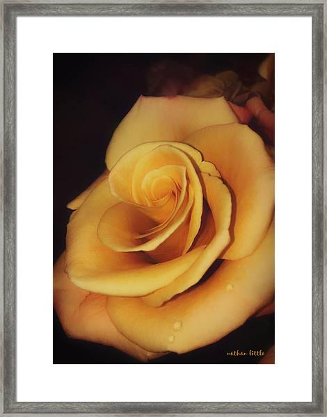 Dark And Golden Framed Print