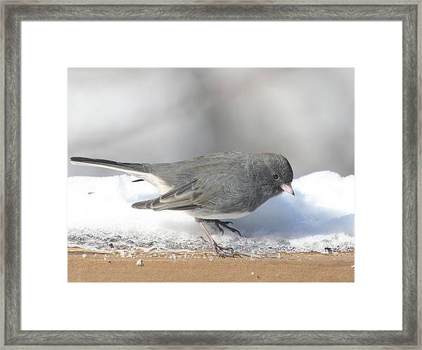 Dark Eyed Junco On The Railing 3 Framed Print by Laurie With
