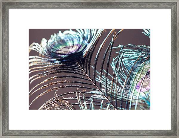 Dark Feathers Framed Print
