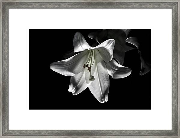 Dark Lilly Framed Print